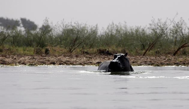 A-Mali-swimming-in-the-Niger-river